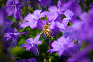 bee, insect, pollinate-6360894.jpg